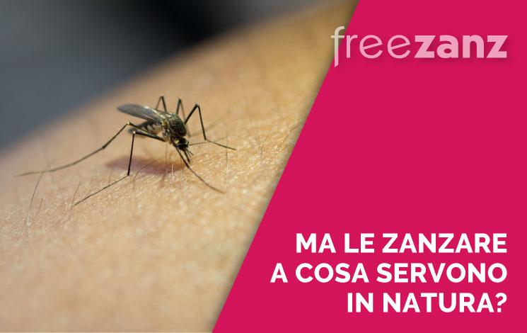 A cosa servono le zanzare in natura?