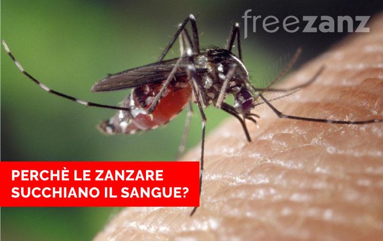 Perché le zanzare succhiano il sangue