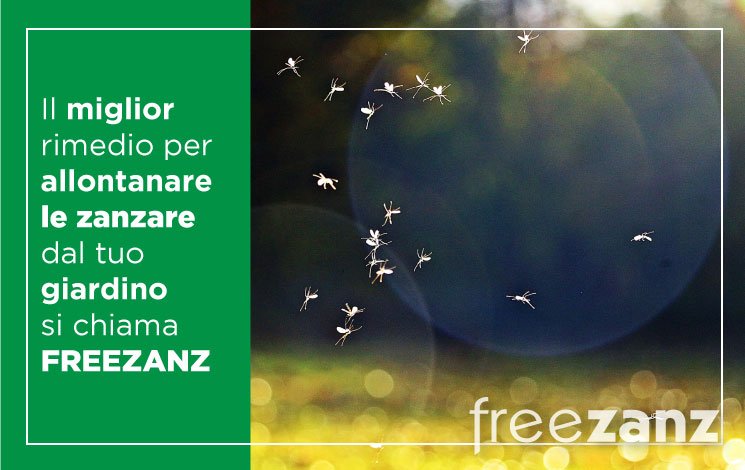 Rimedio per allontanare le zanzare dal giardino