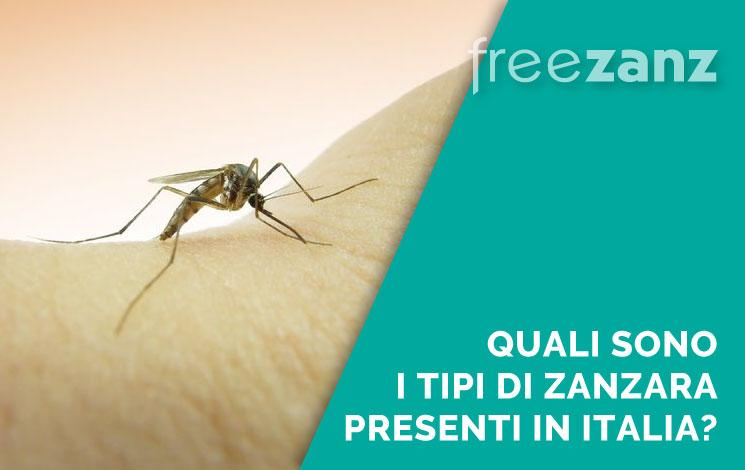 Tipi di zanzara presenti in Italia