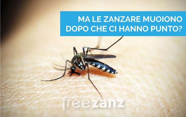 Una zanzara muore dopo aver punto?