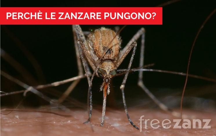 Perchè le zanzare pungono
