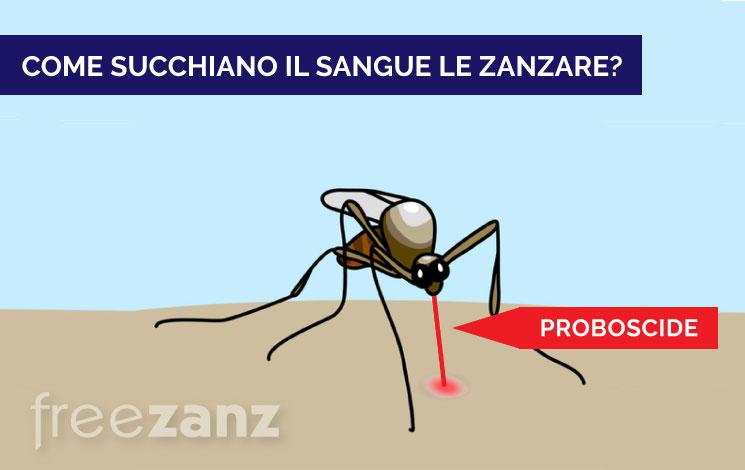 Come le zanzare succhiano il sangue